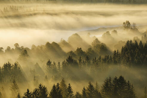 Germany, Bavaria, Aerial view of thick morning fog shrouding forest in Isarauen nature reserve - SIEF09279