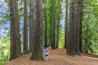 Neuseeland, Ozeanien, Nordinsel, Rotorua, Hamurana Springs Nature Reserve, Redwood Forest - Mammutbäume (Sequoioideae) mit Touristin (w) - FOF11000