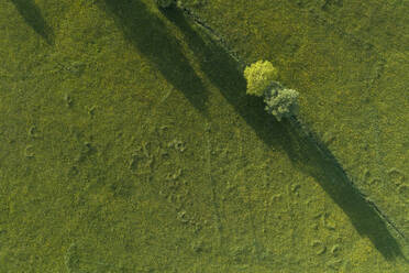 Germany, Bavaria, Aerial view of green countryside meadow in spring - RUEF02373