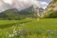 View of road leading into mountains, Unterburg, Styria, Tyrol, Austrian Alps, Austria, Europe - RHPLF12790