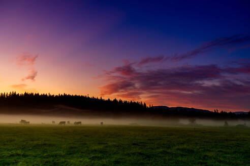 Farmland of Auburn at sunrise, Washington State, United States of America, North America - RHPLF12880