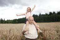 Portrait of happy little girl on grandfather's shoulders in an oat field - EYAF00694