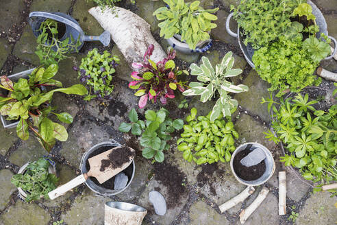 Planting of various green culinary herbs - GWF06310