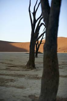 Dead trees in Deadvlei at sunrise, Sossusvlei, Namib desert, Namibia - VEGF00919