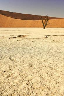 Dead trees in Deadvlei, Sossusvlei, Namib desert, Namibia - VEGF00931