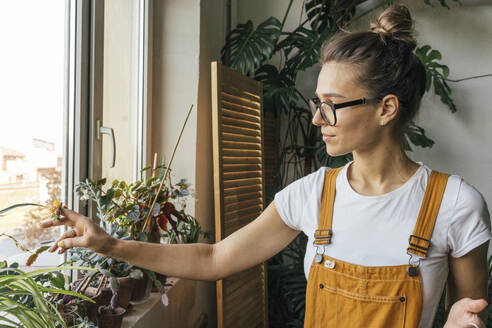 Young woman caring for plants on window sill - VPIF01835