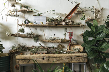 Assortment of plants and decoration in a showroom - VPIF01895