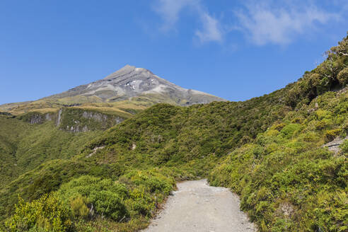 New Zealand, Scenic view of Mount Taranaki volcano and surrounding forest in spring - FOF11307