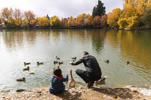 Father and daughter feeding ducks at lakeshore - GEMF03322