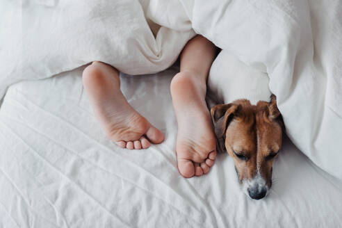 Crop young boy sleeping with dog in bed. - CAVF69884