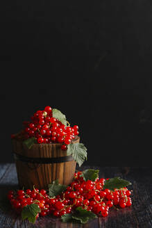 Red currants in bucket on table against black background - CAVF70286