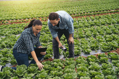 Almeria, Spain. Technician and grower in an outdoor lettuce field. Woman and man supervising the lettuce field. - MPPF00383
