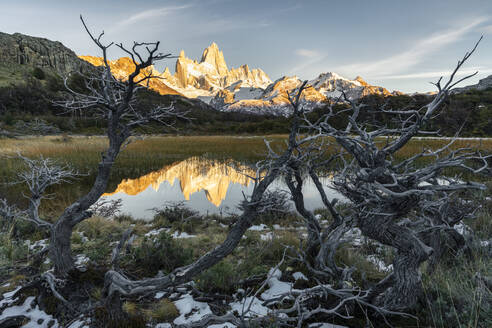 Fitz Roy reflection at dawn from Mirador Fitz Roy, with trees in the foreground, El Chalten,, Los Glaciares National Park, UNESCO World Heritage Site, Santa Cruz province, Argentina, South America - RHPLF13144