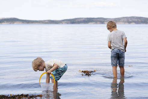Brothers picking up seashells on beach - CUF53735