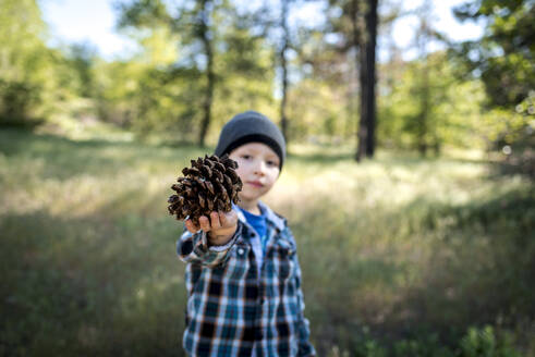 Portrait of boy showing pine cone while standing on field - CAVF70633