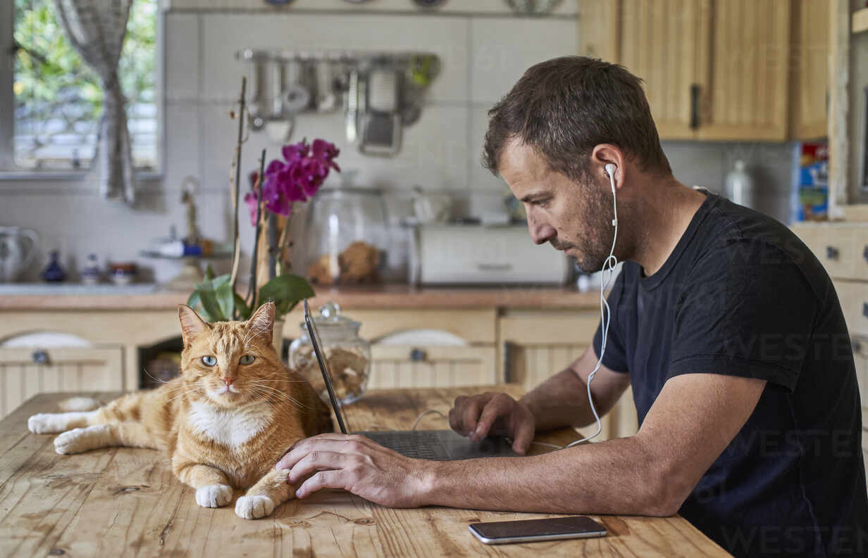 Man working from home, sitting at kitchen table with cat, using laptop - VEGF01221 - Veam/Westend61