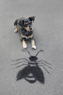 Portrait of mongrel lying on asphalt in front of drawn oversized insect - PSTF00583