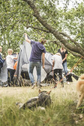Family pitching tent at camping site with dogs in foreground - MASF15659