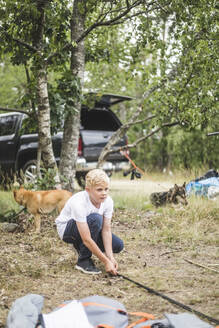Boy preparing tent while dogs resting in background at campsite - MASF15662