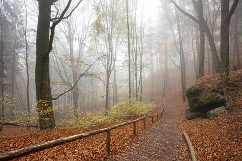 Germany, Saxony, Empty footpath in foggy autumn forest of Saxon Switzerland National Park - WIF04130