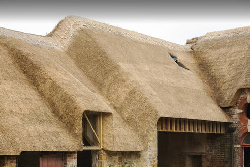 An old barn being re thatched in the Dorset village of Symondsbury - CAVF71908