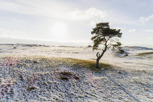 Lone tree in frozen field - JOHF05036