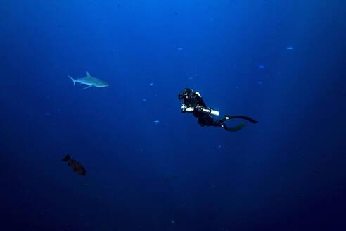 Palau, Blue Corner, Diver and grey reef shark (Carcharhinus amblyrhynchos) underwater - GNF01528