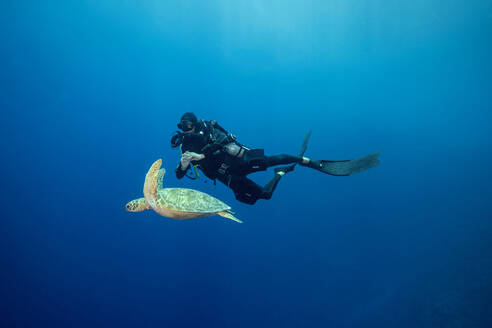 Palau, Blue Corner, Diver and sea turtle underwater - GNF01531