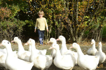 Boy with domestic ducks on meadow - ECPF00811