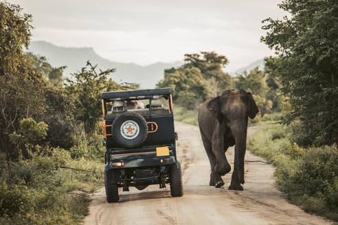 Sri Lanka, Sabaragamuwa Province, Udawalawe, Elephant walking past safari car in Udawalawe National Park - DAWF01145