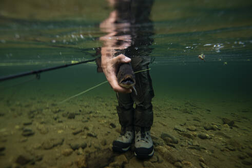 A fly fisherman holding a brook trout underwater before releasing it. - CAVF73408