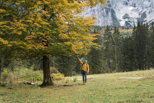 Hiker touching autumn leaves, Friuli Venezia Giulia, Italy - MAUF03216