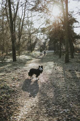 Mother and daughter with border collie in the woods - DWF00530