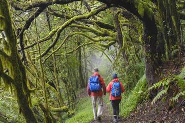 Spain, Canary Islands, La Gomera, Couple hiking along forest footpath inGarajonay National Park - SIEF09409
