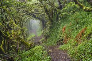 Spain, Canary Islands, La Gomera, Empty forest footpath in Garajonay National Park - SIEF09412