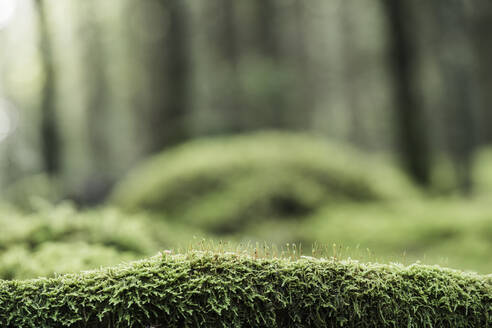 Moss on log in forest - JOHF05393