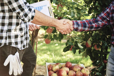 Fruit growers agreeing on a deal, shaking hands - ABIF01261