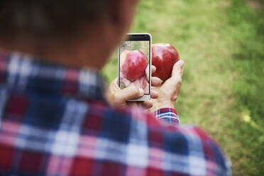 Man taking picture of an apple with his smartphone - ABIF01267