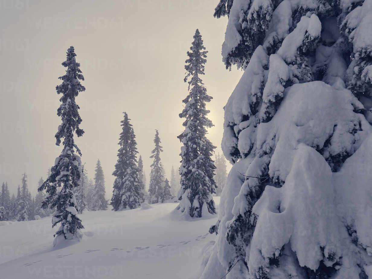 Winter landscape - JOHF05882 - Johner Images/Westend61