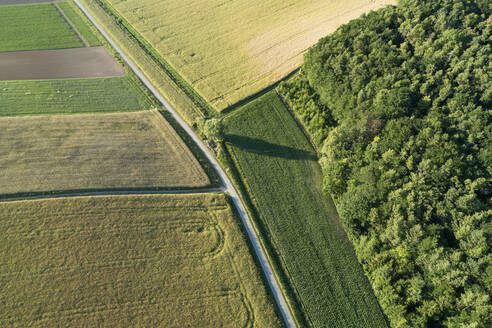 Germany, Bavaria, Franconia, Aerial view of green fields and dirt road - RUEF02595