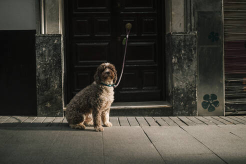 Dog tied to a door in the city - GRCF00136
