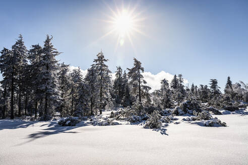 Winter landscape at Hornisgrinde, Black Forest, Germany - MSUF00154