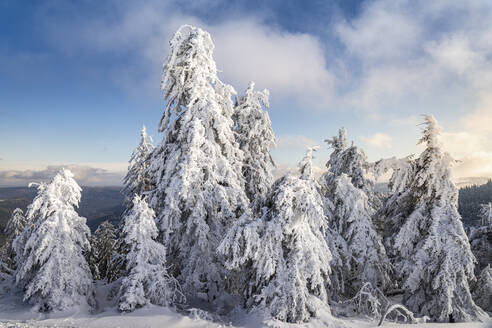 Winter landscape at Hornisgrinde, Black Forest, Germany - MSUF00157