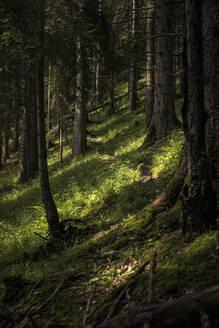 Path through forest, Karwendel, Tyrol, Austria - MSUF00190