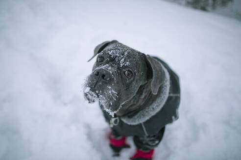 Dog at winter - JOHF06588