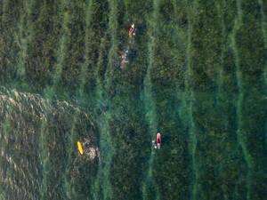 Aerial view of surfers in the ocean - CAVF74096