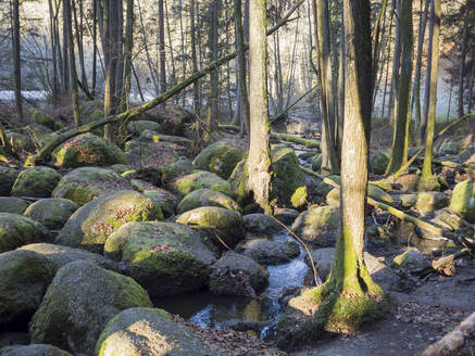 Germany, Bavaria, Stream flowing between mossy boulders in Upper Palatinate Forest - HUSF00115