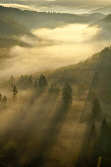 Morning mist and trees in autumn, Saar Valley, Mettlach, Saarland, Germany - CUF54728