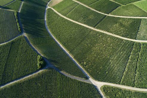 Germany, Bavaria, Drone view of green vast vineyard in summer - RUEF02619