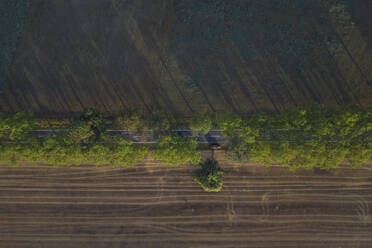 Germany, Brandenburg, Drone view of treelined country road cutting through agricultural field - ASCF01098